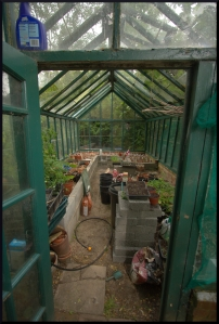 A view into the greenhouse