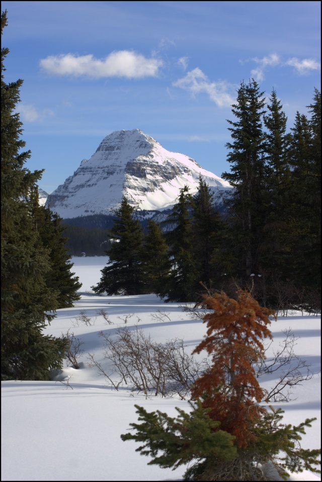 A good old honest mountain, just off the Icefields Parkway, Alberta, Canada..